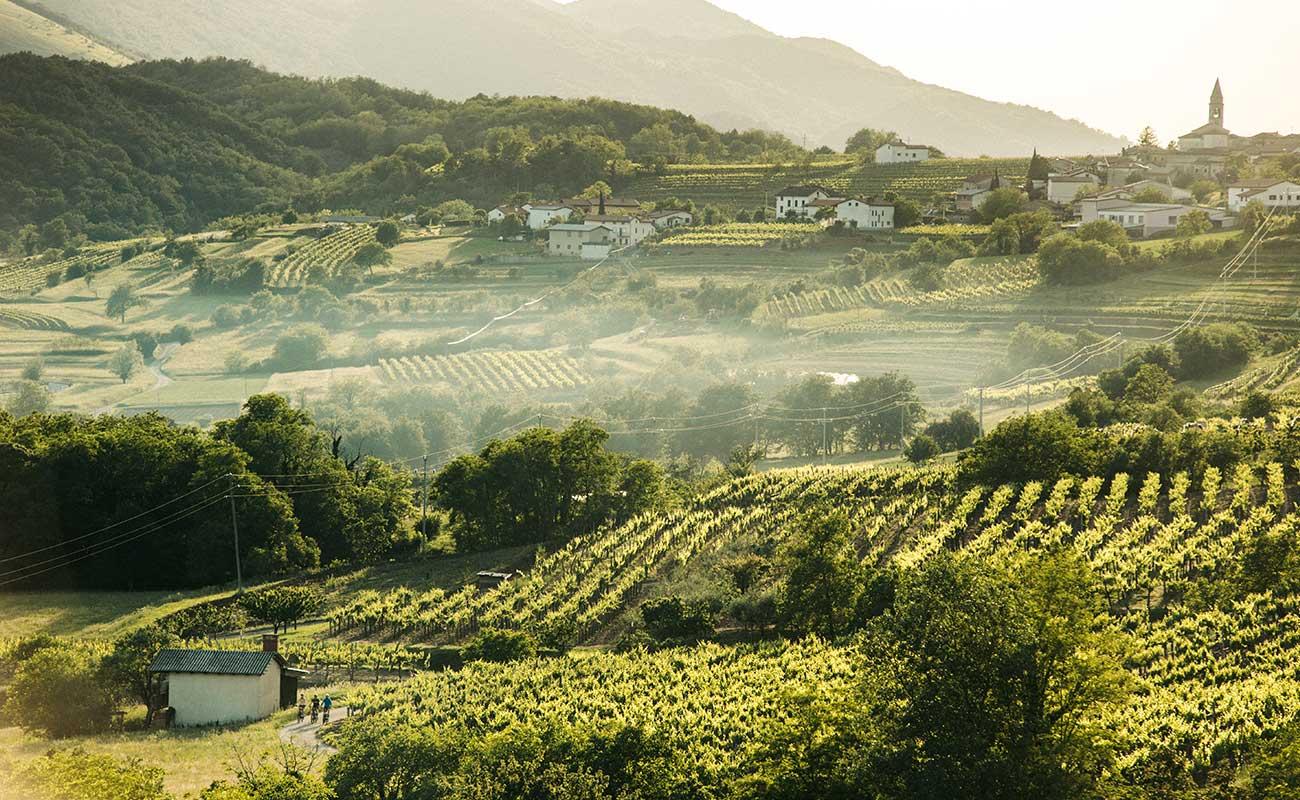 vipava valley cycling
